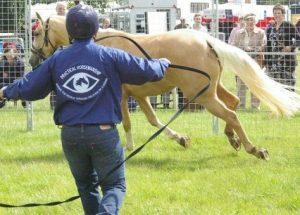 Practical Horsemanship Banner