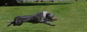 Terrier Image
