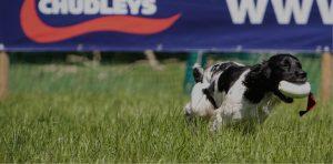 chudleys dog banner