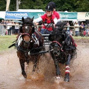 horse driving trial