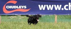 Chudleys Gundog Championship - Web Header